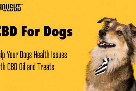 Help Your Pets Health Issues With CBD