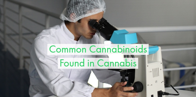 Different Types Of Cannabinoids And Their Benefits