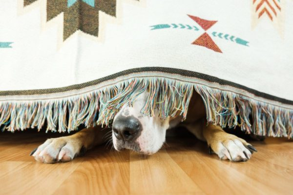 CBD Dog Treat Facts