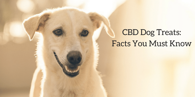 CBD Dog Treat: Facts You Must Know