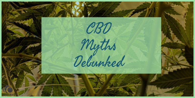 Myth – CBD is Good & THC is bad