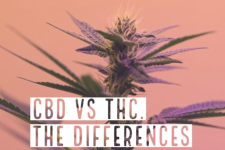 CBD Vs THC. What Are The Differences?