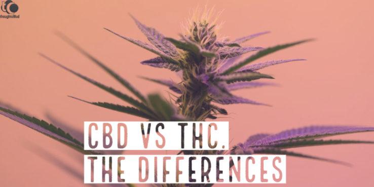 CBD vs THC,differences between CBD and THC