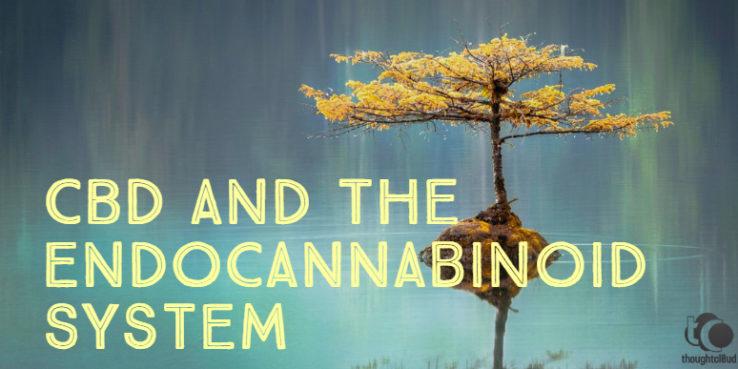 CBD and The Endocannabinoid System