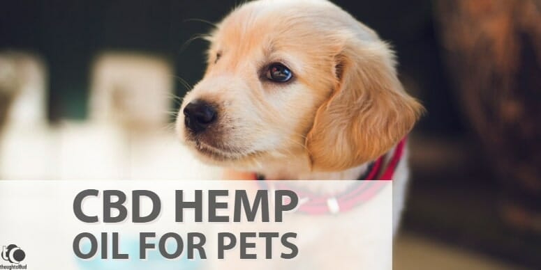 Quick Guide: Pet Caring With CBD Hemp Oil for Pets