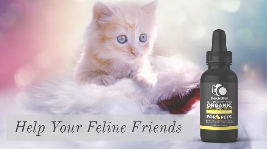 Use CBD Oil For Cats To Help Your Feline Friends
