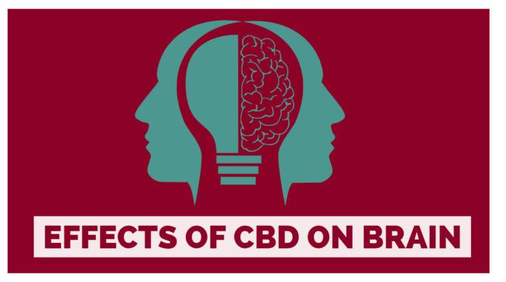 Effects of CBD on brain