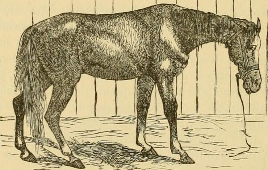 CBD For Horses