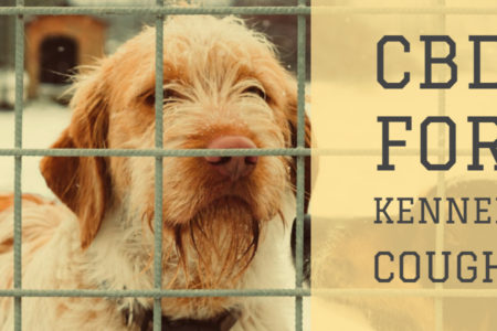 CBD For Kennel Cough | One-Stop Guide For Your Dog's Kennel Cough