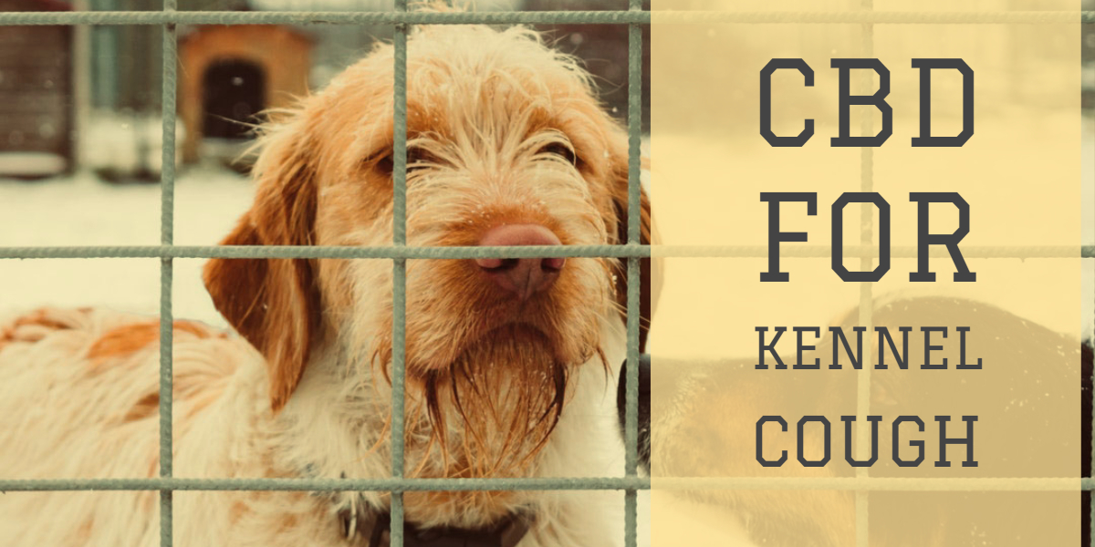CBD For Kennel Cough