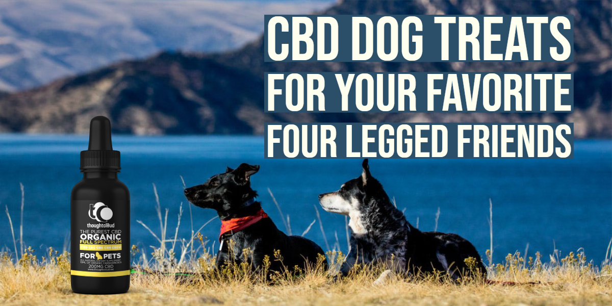 CBD Dog Treats Recipe For Your Favorite Four Legged Friends
