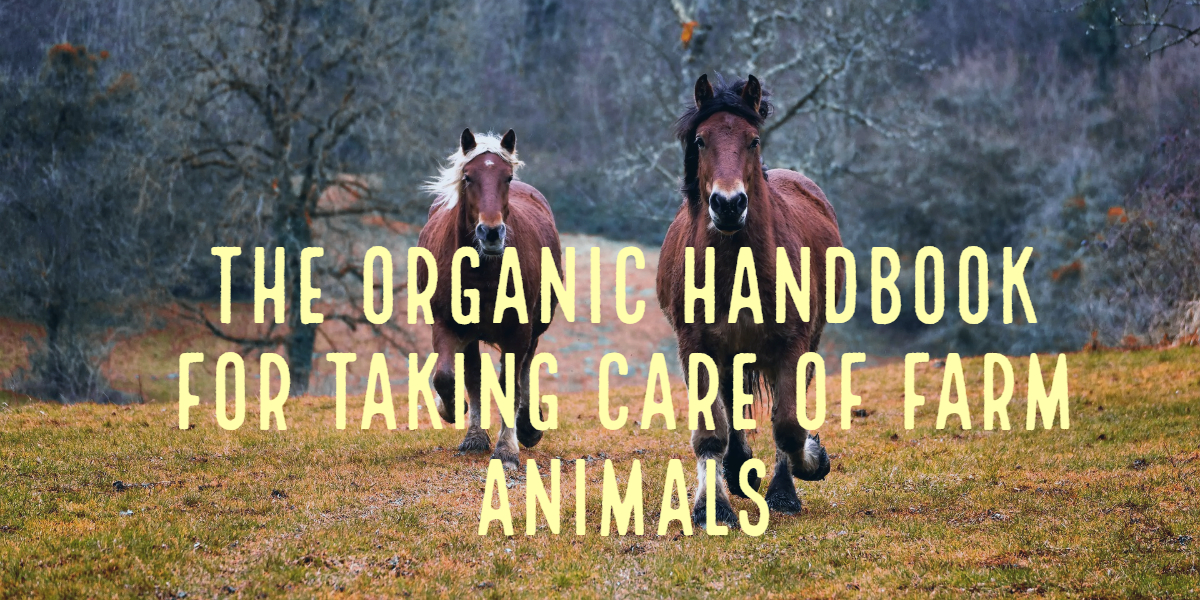 CBD For Farm Animals | Organic Handbook For Taking Care of Farm Animals
