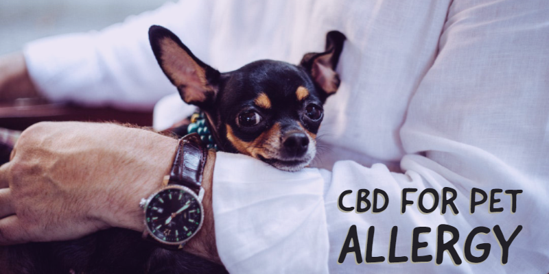 How CBD Oil May Treat Your Pet's Skin Allergies