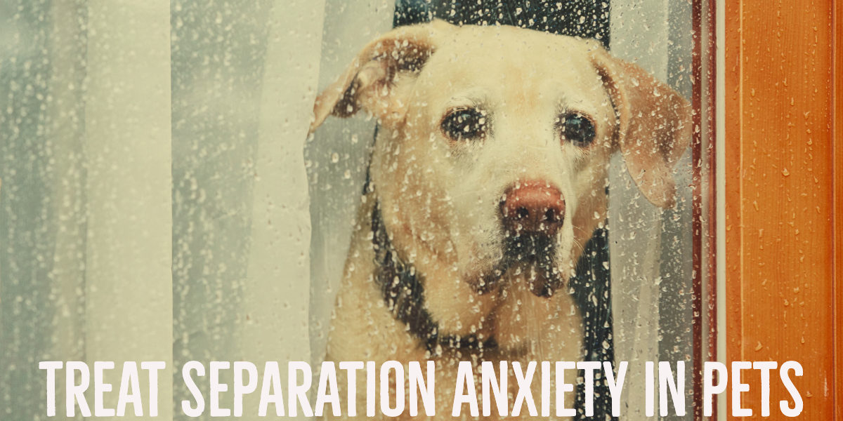CBD: A Natural Way To Treat Separation Anxiety In Pets