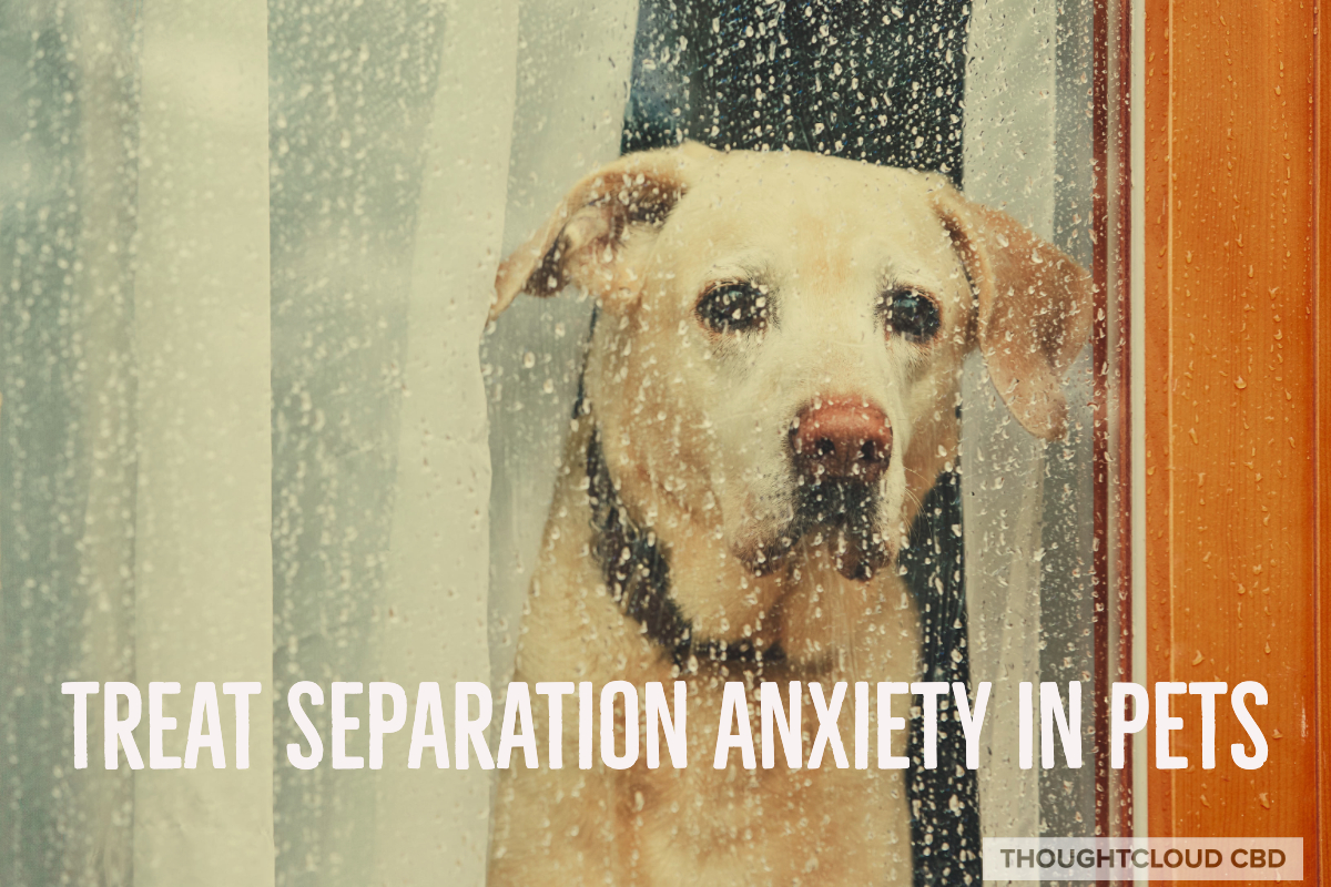 A Natural Alternative – Using CBD For Separation Anxiety In Dogs