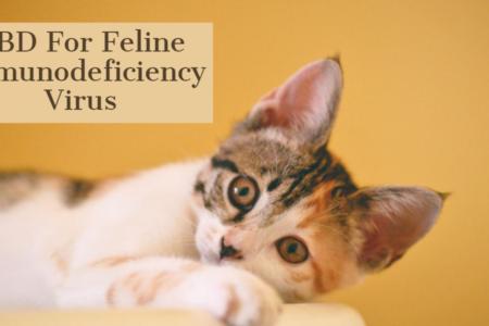 Treating Feline Immunodeficiency Virus Via CBD