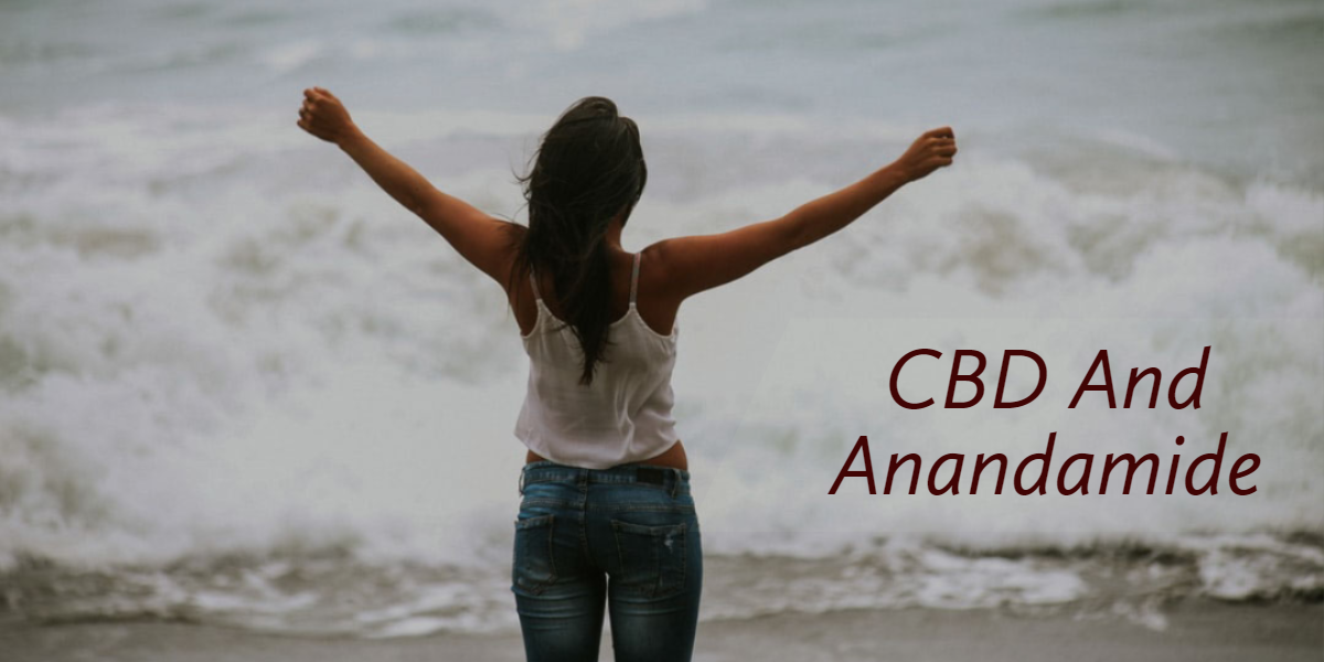 All You Need To Know About CBD And Anandamide