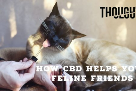 CBD for Cats: How it Helps Your Feline Friends
