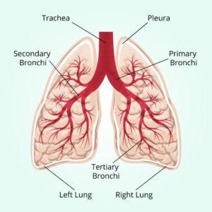 cbd inflammation lungs