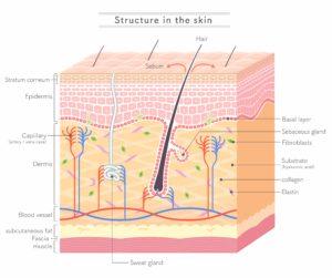 Seborrheic Dermatitis Skin Care