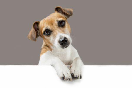 Does CBD Oil Calm Your Dog?