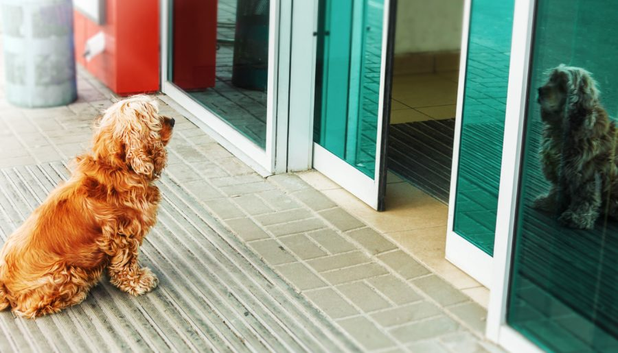 Separation Anxiety In Pets